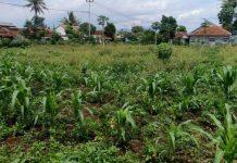 Ilustrasi tanah kebun