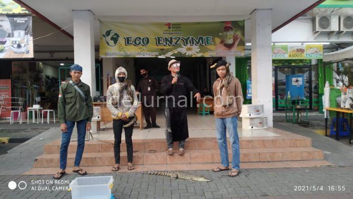 Pecinta hewan reftil asal Kopo, Arie CS, bèrfoto bersama ularpiton, buaya cilik yang dipertonttonkan di Pasar segar Kopo, Margahayu Selatan.